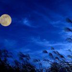 ホルモンと月のめぐりを理解して、体調や肌の不調をクリア!